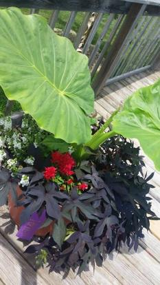 Planter (405x720)